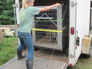 Unloading Sabrina at The Wildcat Sanctuary