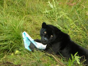 Diablo_the_black_jaguar_painting