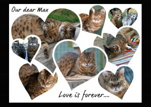 Max collage