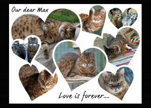 Max collage
