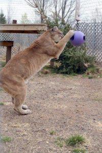 Tasha plays with hanging ball