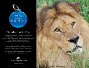 No_More_Wild_Pets_lion