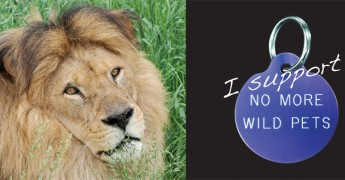NMWP_web_header_aslan