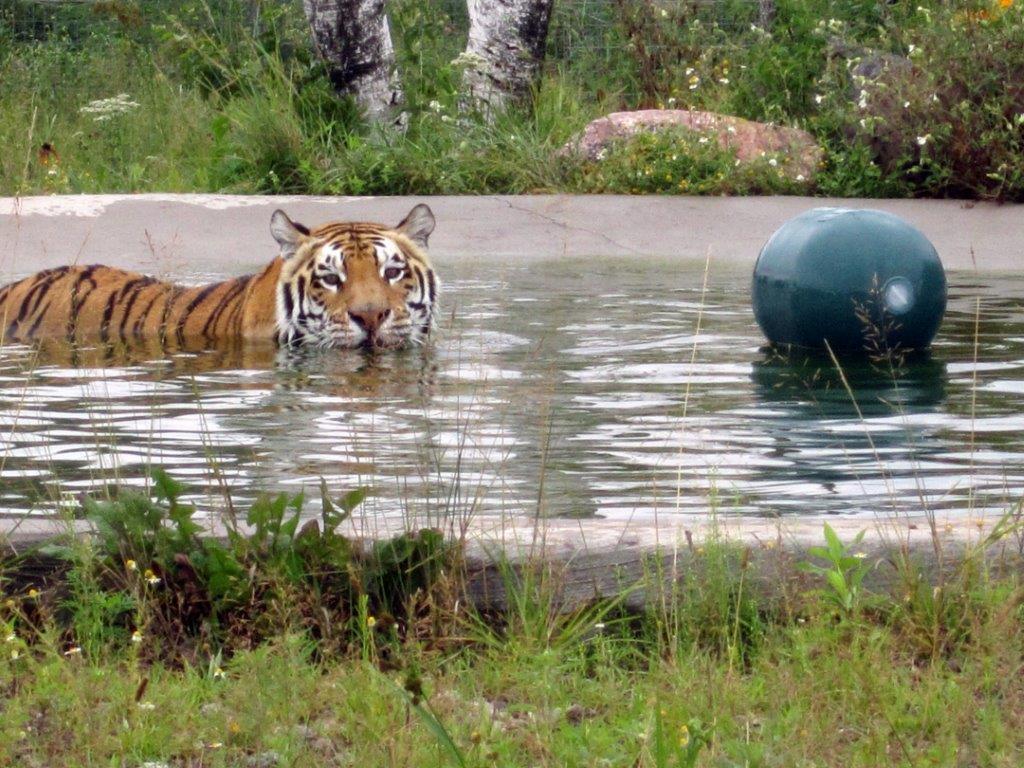 Titan in pool