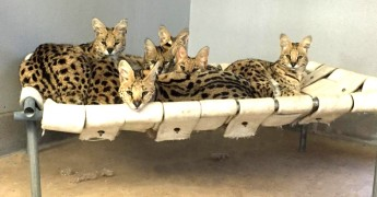 serval group