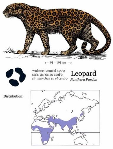 Gut gemocht The top 5 differences between jaguars and leopards - The Wildcat  HT99