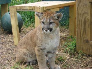 Wild-born orphan Donoma