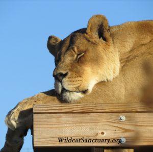 Shanti sleeping platform