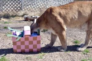 Tasha enjoys Easter basket 1