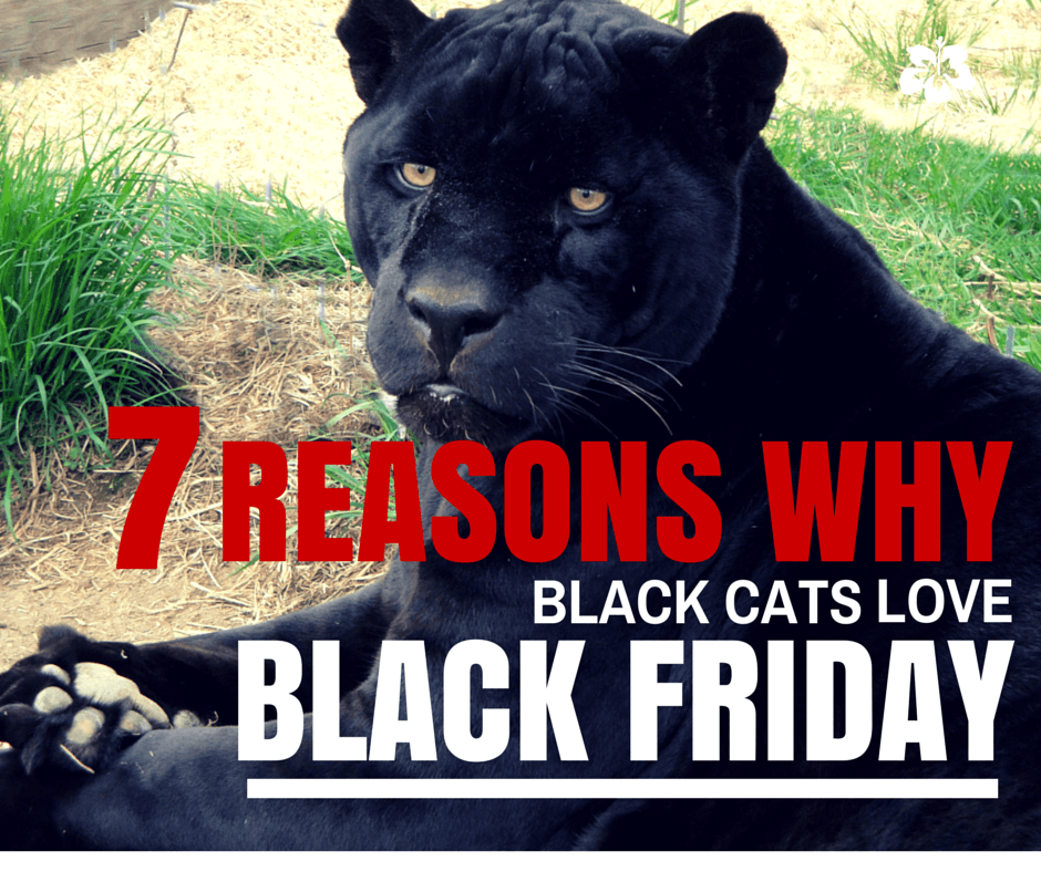 13 Black Cats To Bring You Good Luck on Friday the 13th ...