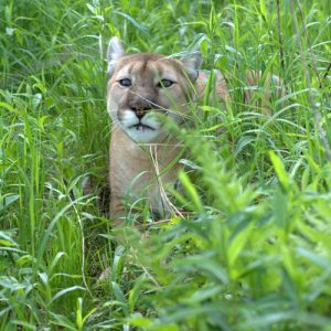 Tasha in grass