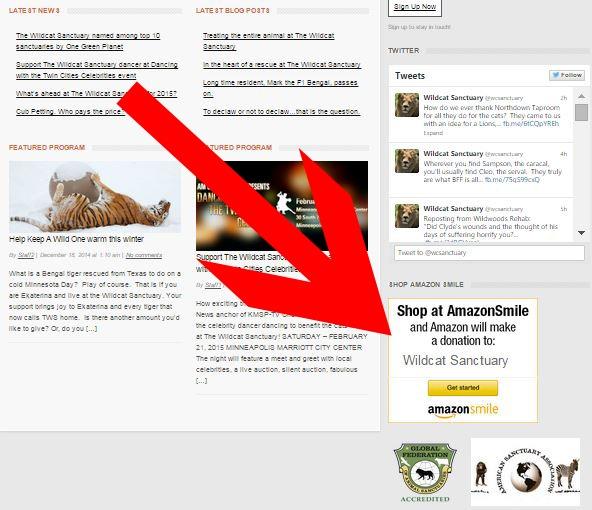 widget on website red arrow - The Wildcat Sanctuary