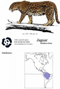 The top 5 differences between jaguars and leopards - The