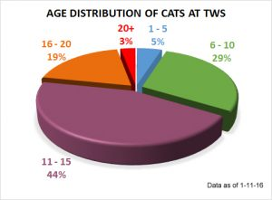 Cat age distribution 1-11-16