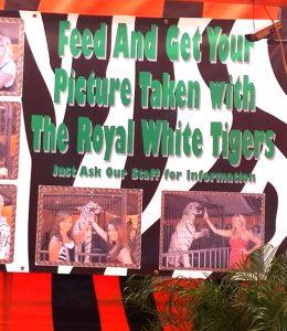 royal white tiger sign