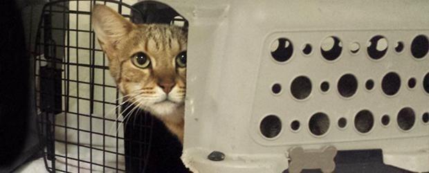Leo in quarantine
