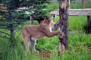 andre-scratching-tree_lr