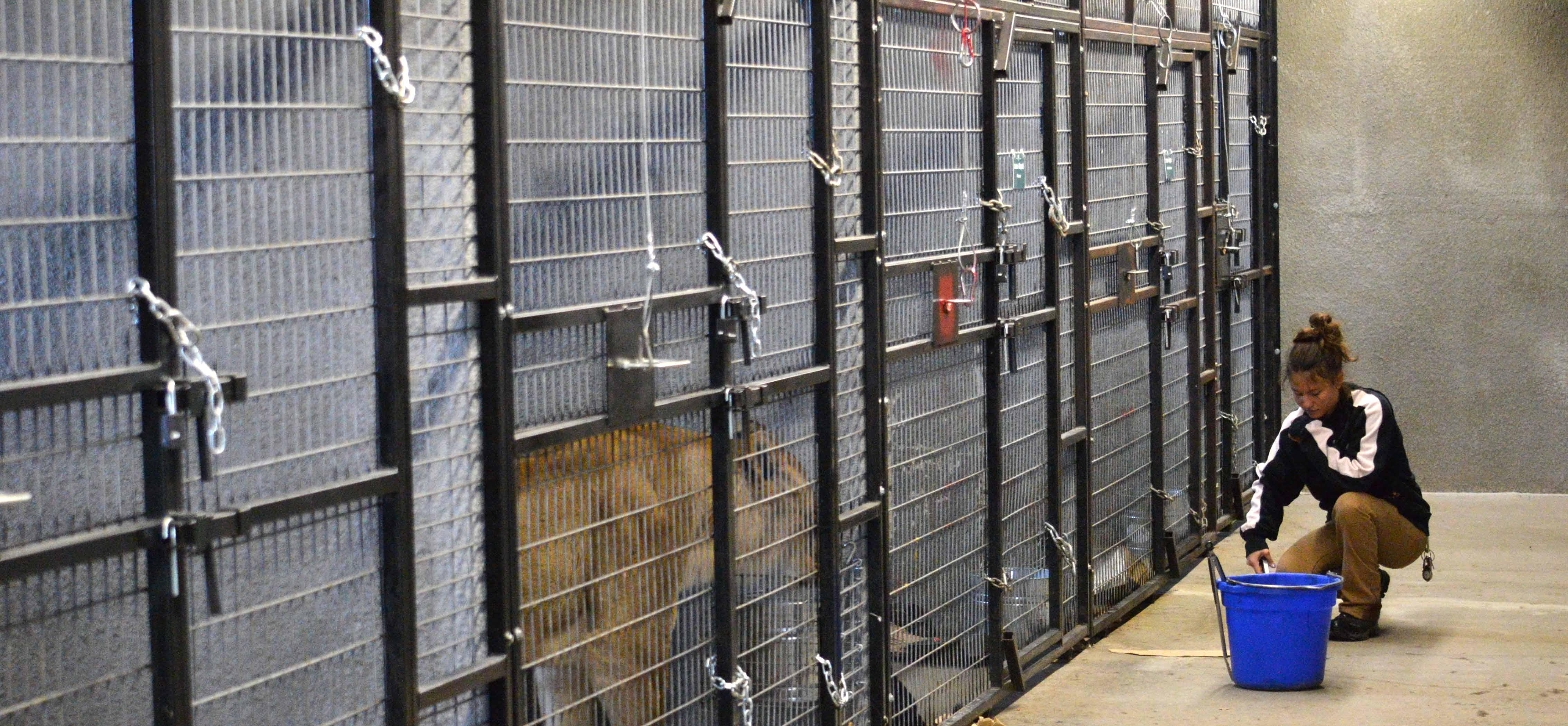 animal rescue Archives - The Wildcat Sanctuary