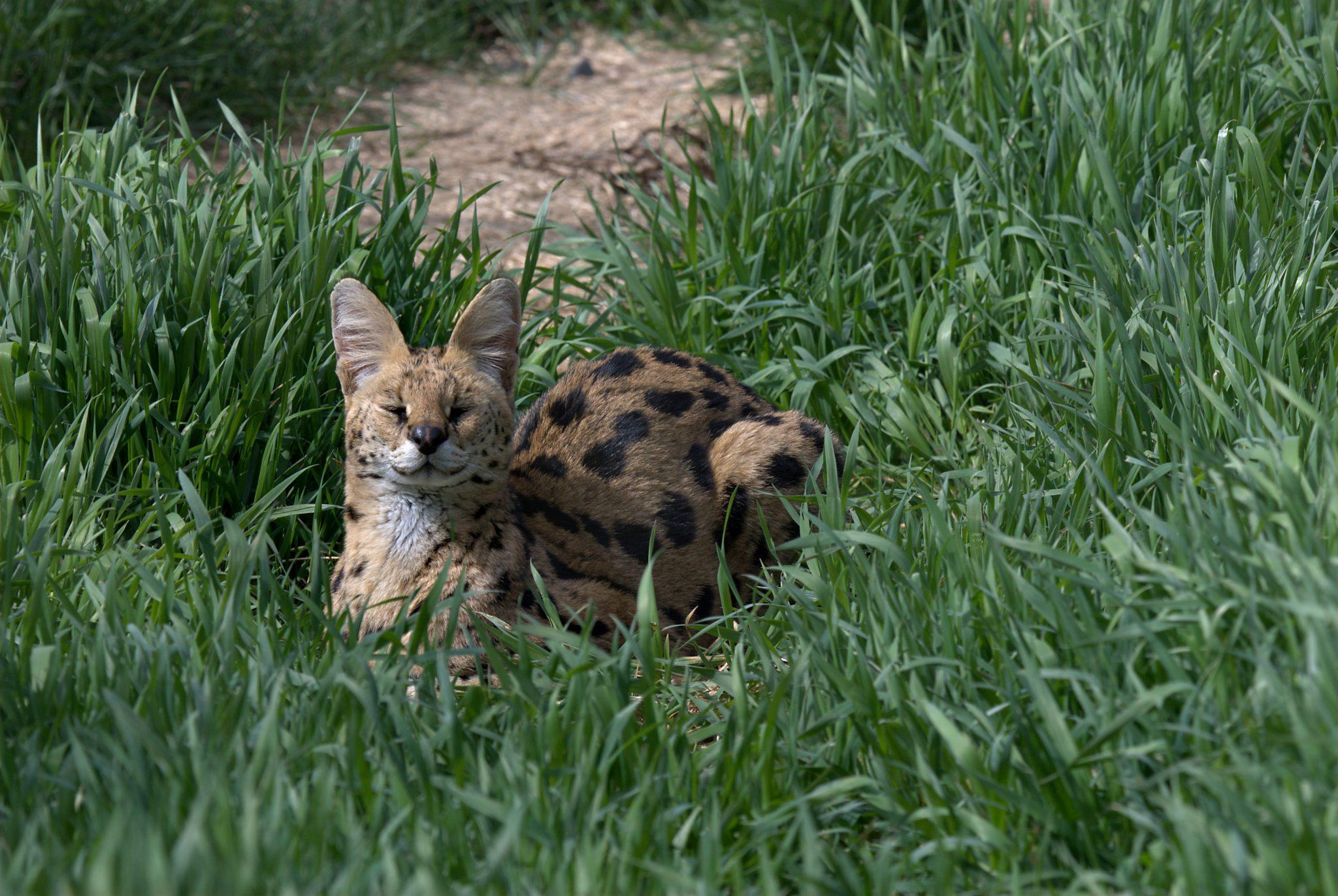Morocco - The Wildcat Sanctuary
