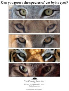 Kids programs and teacher curriculum guide that will help save wild cats