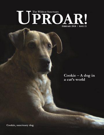 Cover-Feb-2018-Uproar