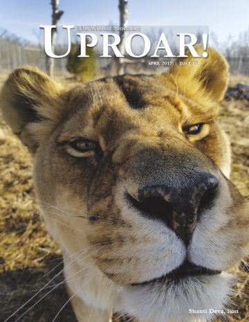 Cover-Uproar-Magazine-April-2017