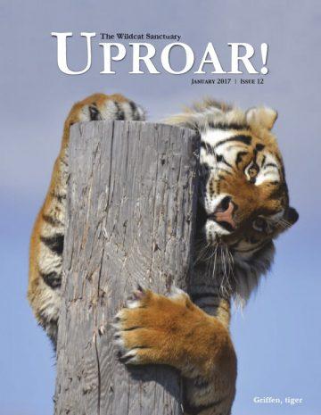 270106-8024-Uproar Magazine-January 2017.pdf