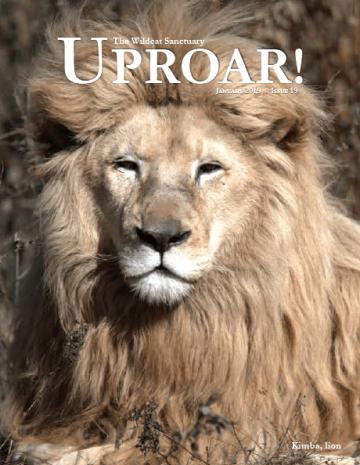 Jan-Uproar-cover