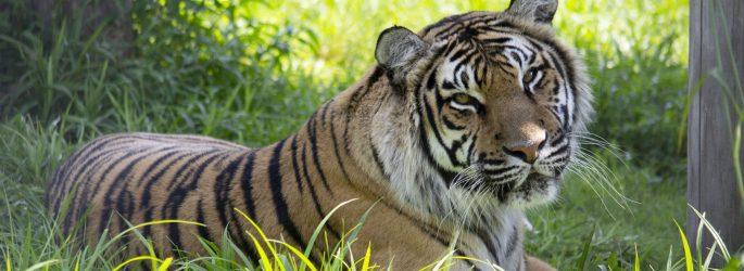 The Wildcat Sanctuary Non-Profit | Sandstone, MN