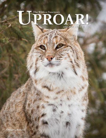 UPROAR_APR2021 (1) (1)