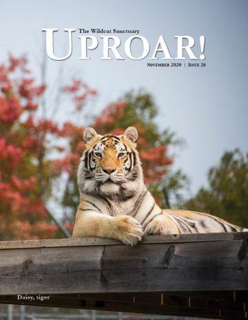 UPROAR_Nov2020_cover_LR (1)
