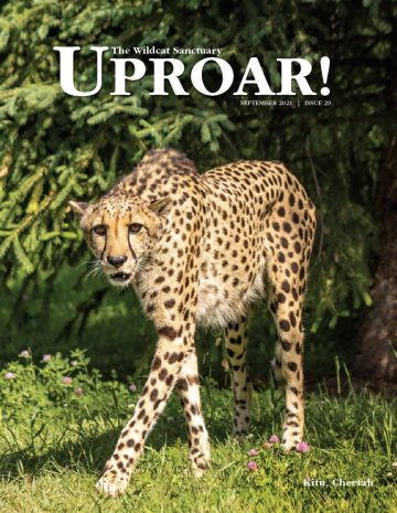 UproarCover_sep21
