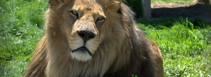 aslan_PCML 12 MAY 12_204