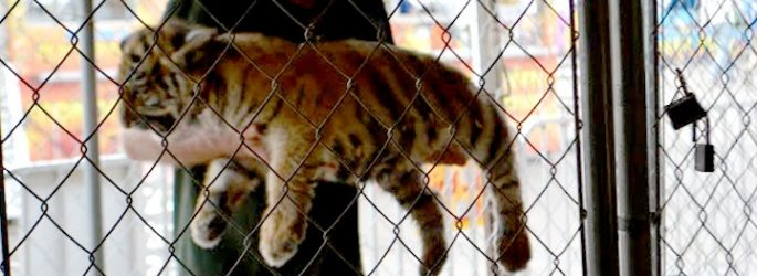 cub-petting-USDA-comments-1